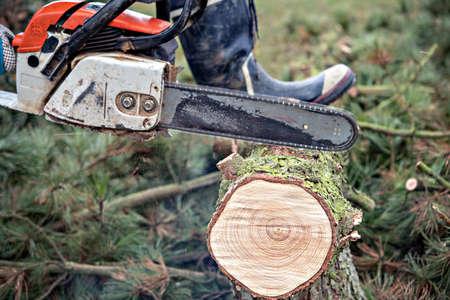 lumberman with worn chainsaw cutting wood