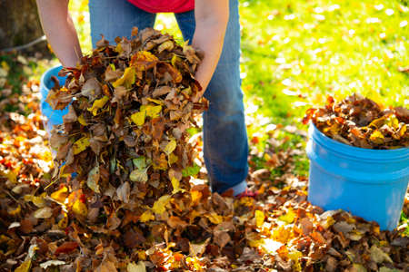 woman working in garden and dispose fall leaves