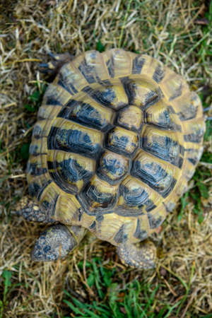 one turtle in front of nature background 版權商用圖片