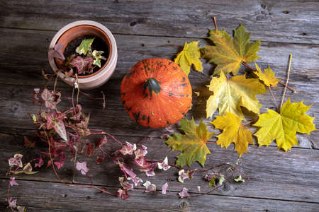 fall-still life with pumpkin, ivy and yellow maple leaves on wooden ground from above 版權商用圖片