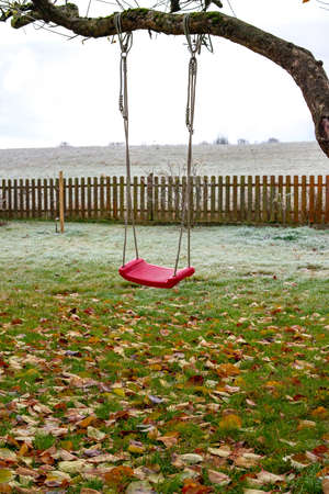 swing on tree in garden with autumn leaves on meadow
