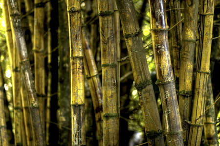 Carved Bamboo Stock Photo