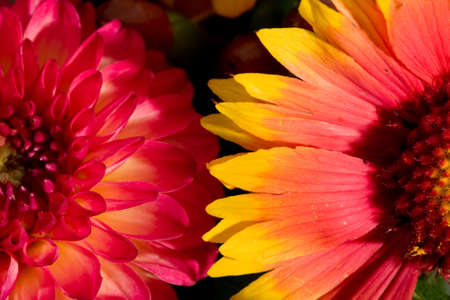 Close-up of orange and pink wild flowers