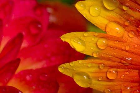 Orange and yellow flowers with water droplets