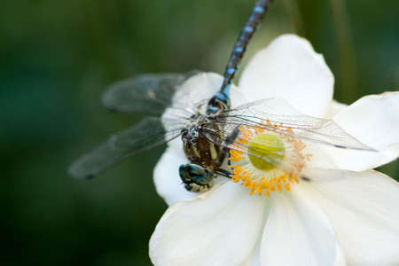 Close-up of a dragonfly on a flower Stock Photo