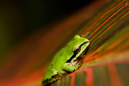 Close-up of a green frog seating on a leaf