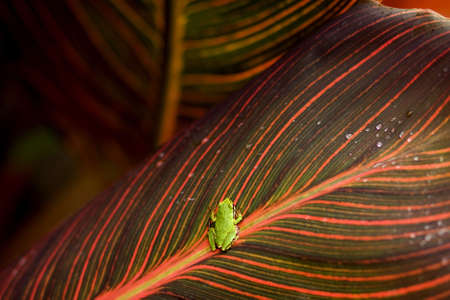Multi-colored leaf with a small green frog on it