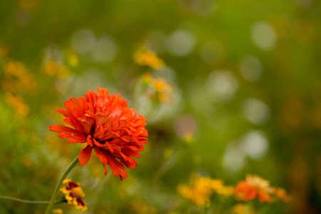Bright red wild flower