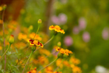 Beautiful yellow and orange wild flowers