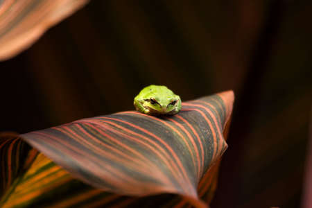 Green frog on a multi-colored leaf Stock Photo