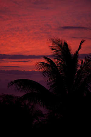 A beautiful red tropical sunset