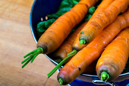 Fresh carrots and greens from the garden Stock Photo