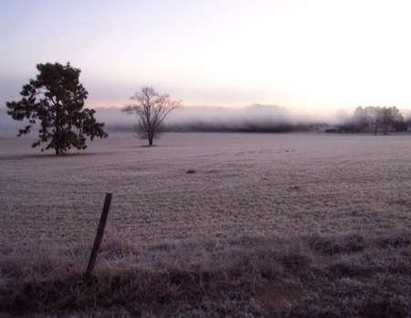frosty morning: Frosty Morning