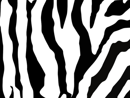 Zebra seamless pattern photo