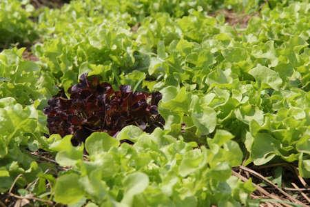 Vegetable plots photo
