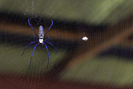 Spider web in a house Stock Photo - 13589136