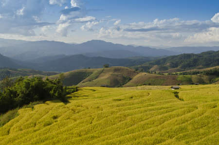 Rice terrace northern of Thailand Stock Photo - 16403466