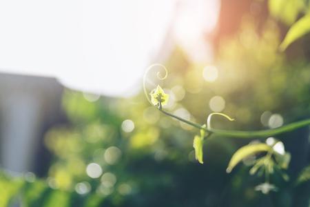 Sunlight shining to youg green tree branch. Stock Photo