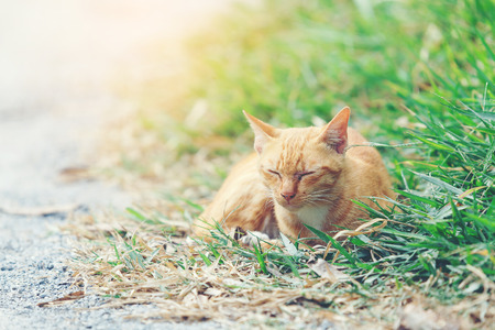 Orange cat sleeping on green grass for more warm in daytime.