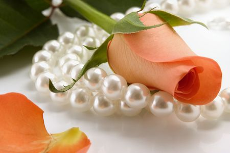white pearl necklace and rose over white background