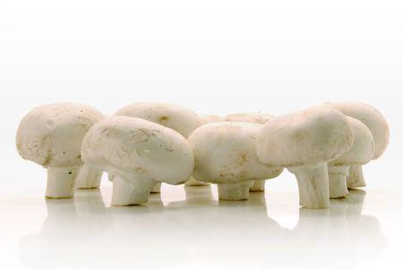 mushrooming: white mushrooms over white background