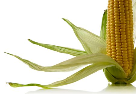 close-up of a corncob isolated over white background photo