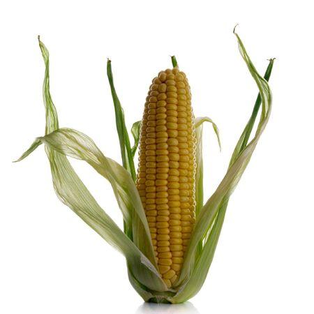 corncob: close-up of a corncob isolated over white background Stock Photo