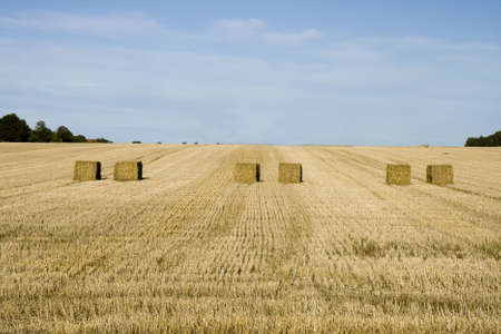 Bales of straw in a Danish cornfield photo