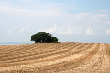 Trees in a field after harvest in autumn, Mols, Denmark Stock Photo - 4009336