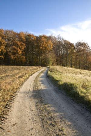 earth road: Terra strada a una piccola foresta vicino a Silkeborg, Danimarca