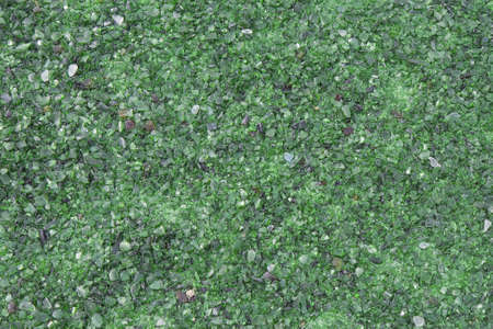 fragments: Small pieces of green glass used in flowerbeds in a park. Can be used as background and color inspiration