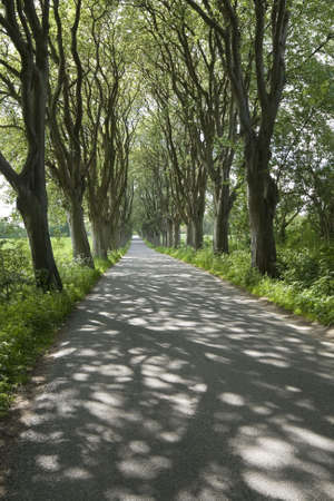 Sunstroke in the avenue at Moesgaard near Aarhus, Denmark Stock Photo - 4980700