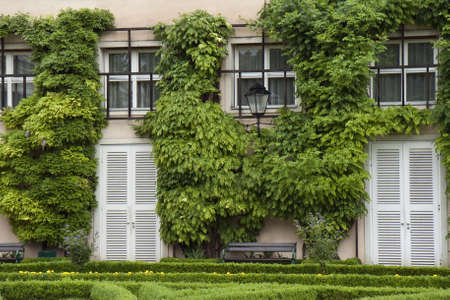 House with ivy. Shot from Salzburg, Austria