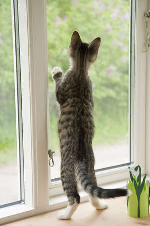 Grey kitten in a window with home made decoration Stock Photo