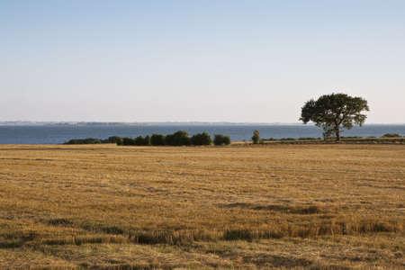 llegar tarde: �rbol solitaria en la costa de final de la tarde. Se puede utilizar como fondo  Foto de archivo