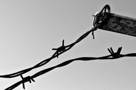 Black and white shot of rusty barbed wire. Copy space photo