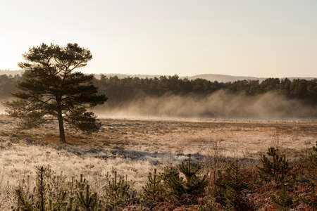 moor: Mist over the moor on a sunny day at fall