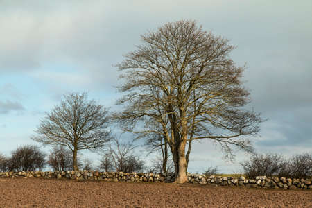 drystone: Trees at a drystone wall in the afternoon light Stock Photo
