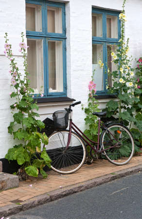 hollyhocks: Bicycle at a white wall with hollyhocks