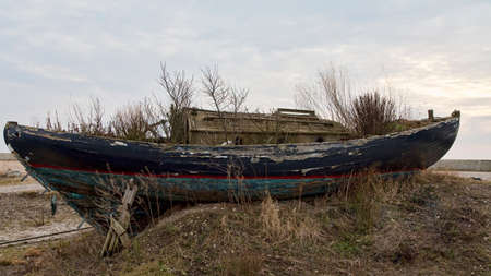 Obsolete boat with bushes growing inside Stock Photo