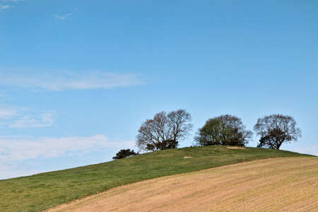 Trees on a hill against a blue sky