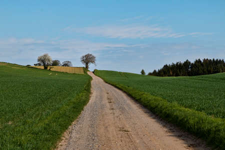 Dirt road in the fields with trees in the background