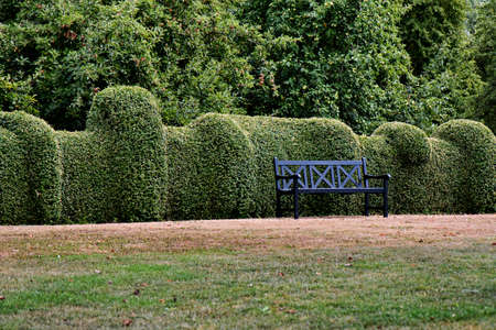Bench in a public park with curved hedge Stock Photo