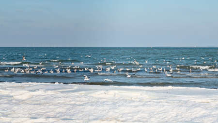 Seagulls at an icy beach on a clear day Stock Photo