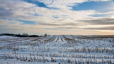 Snow in the fields at sunset