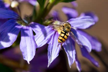 Closeup on a bee on a purple flower