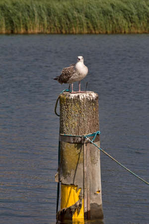 Closeup on a seagull sitting on a mooring poles