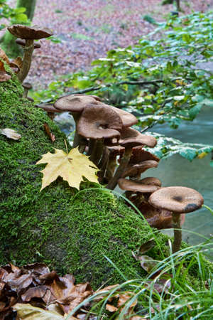 Fungus on an old stump of tree