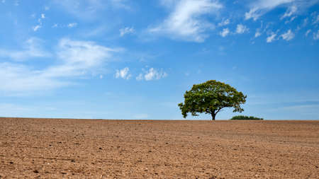 Lonely tree in the field on a summer day