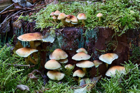 Closeup of fungus on the forest floor